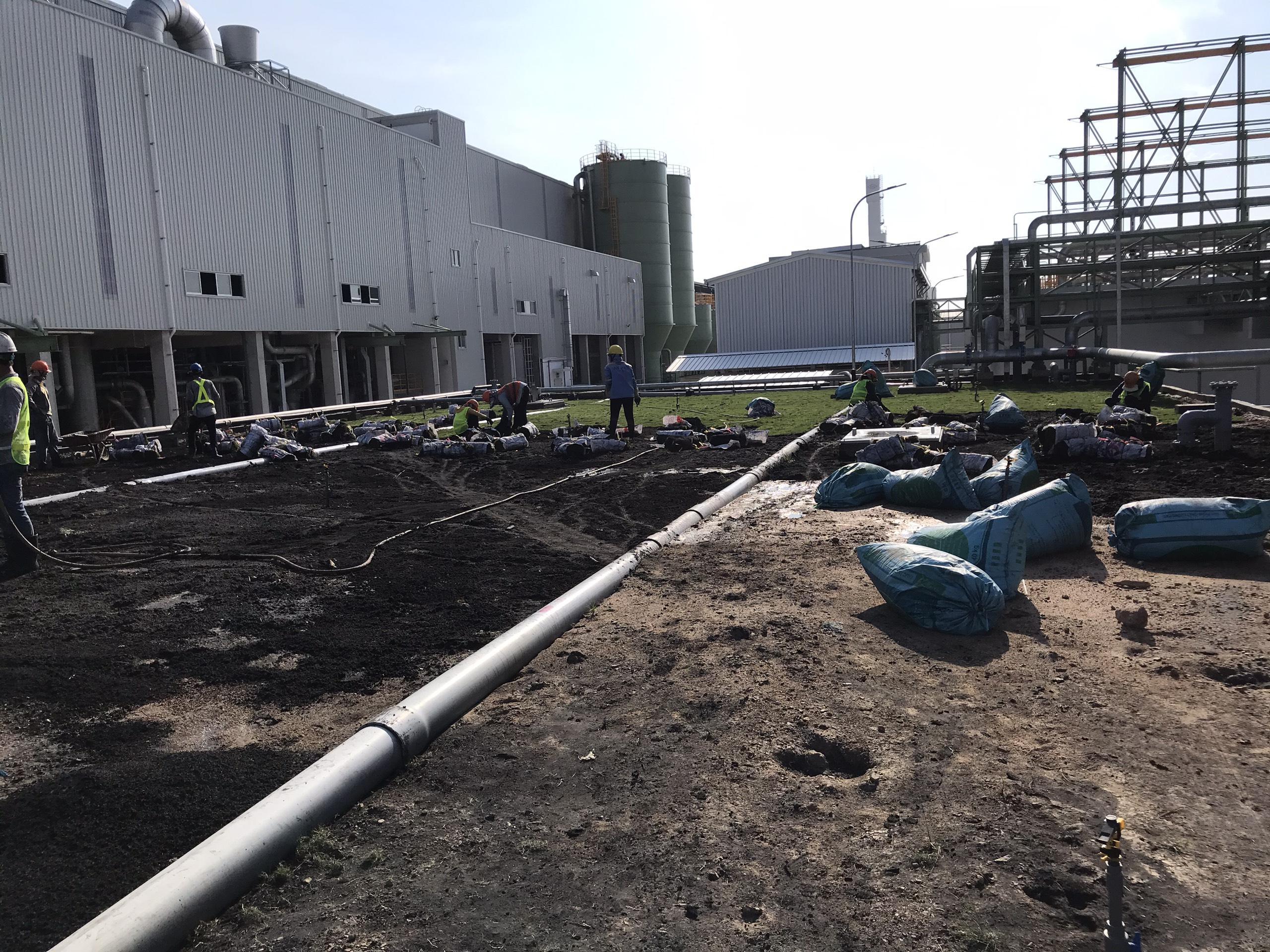 Thực hiện trồng cỏ với nhân viên Ngoại Thất Xanh tại khu công nghiệp Bình Đường