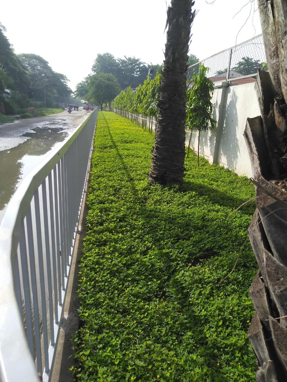 Thuê công ty trồng cỏ thảm tại Bến Lức Long An uy tín