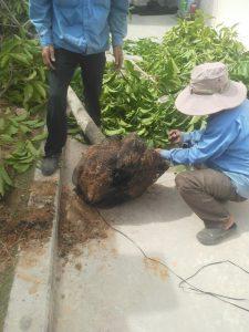 Thuê dịch vụ trồng cỏ cây xanh KCN Bình Đường