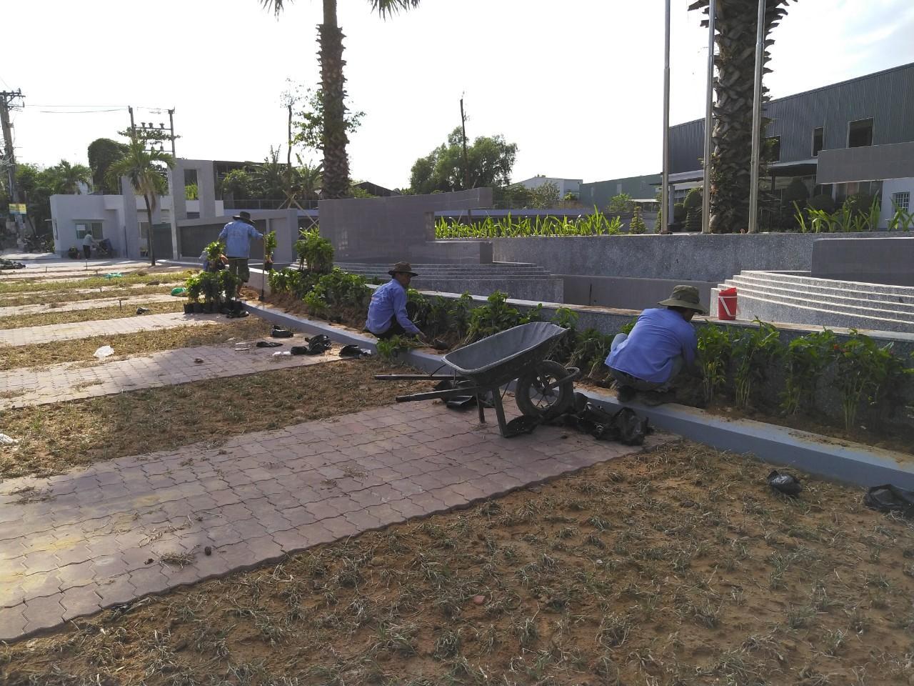 Thuê dịch vụ trồng cỏ cây xanh tại KCN Bình An uy tín