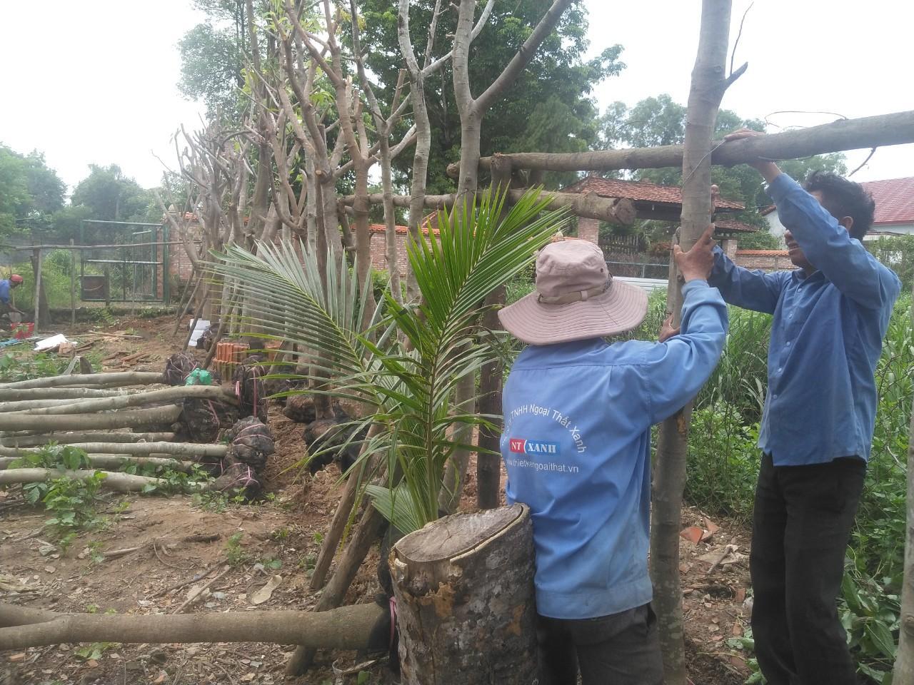 Trồng cây xanh với nhân viên Ngoại Thất Xanh