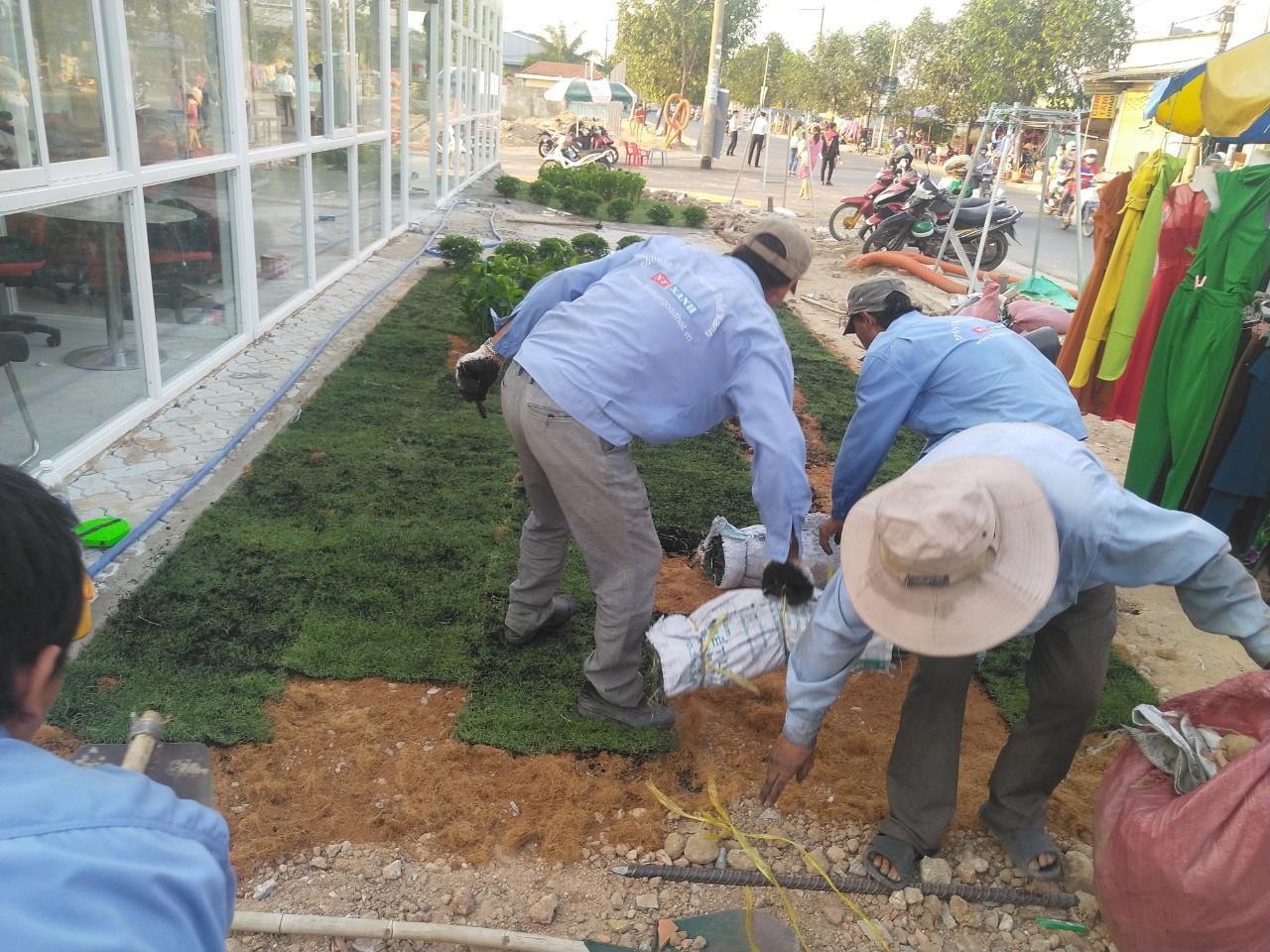 Tròng cỏ tại Bến Lức với nhân viên Ngoại Thất Xanh