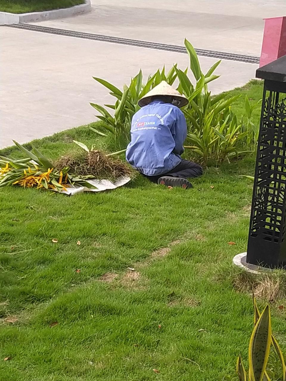 Nhân viên Ngoại Thất Xanh thực hiện chăm sóc cây xanh tại khu công nghiệp