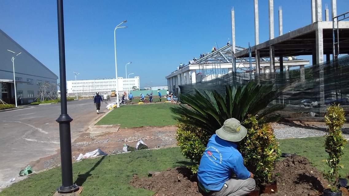 Nhân viên Ngoại Thất Xanh tiến hành trồng cỏ cây xanh tại khu công nghiệp