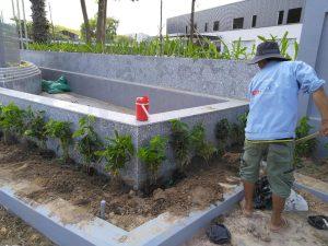 Thi công trồng cỏ cây xanh KCN Mai Trung