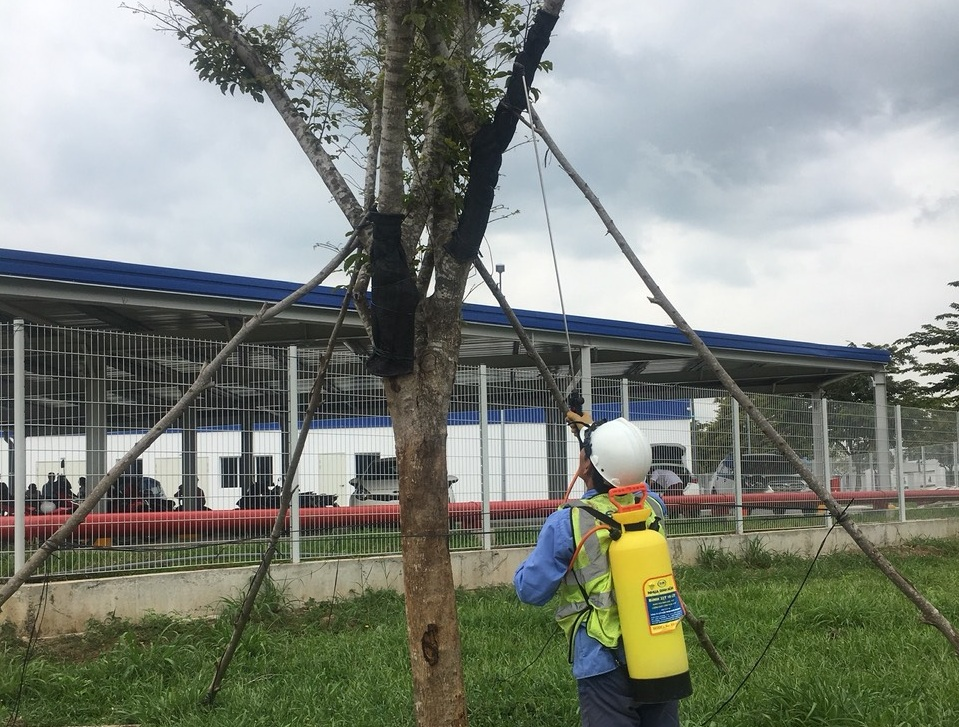 Công ty chăm sóc cây xanh KCN Mai Trung Bình Dương