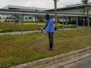 Dịch vụ cắt cỏ, cắt tỉa cây KCN Bình Dương
