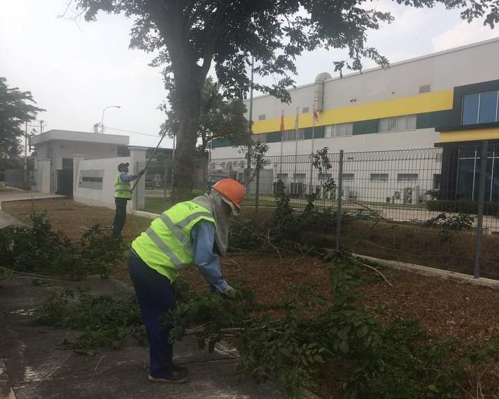 Đơn vị cắt cỏ cắt tỉa cây khu công nghiệp Bình Dương