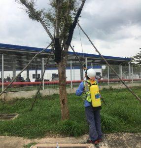 Đơn vị chăm sóc cây xanh KCN Đất Cuốc chuyên nghiệp