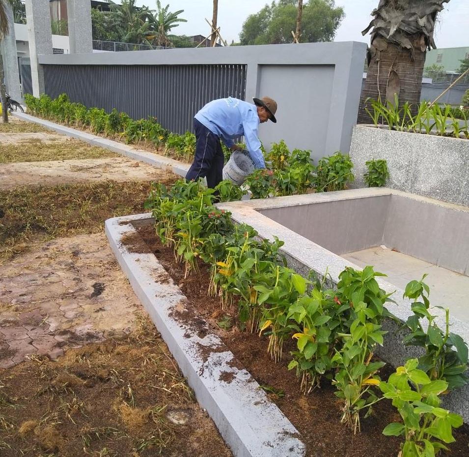 Ngoại Thất Xanh trồng cây xanh trồng cỏ khu công nghiệp Thường Tân