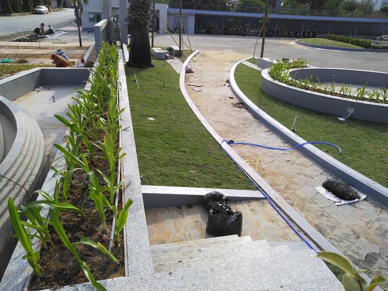Trồng cỏ và cây xanh KCN Đất Cuốc giá rẻ