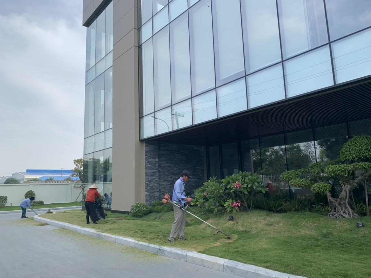 Cắt cỏ KCN Bình An với nhân viên Ngoại Thất Xanh