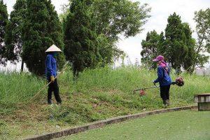 Dịch vụ phát hoang cỏ dại KCN Sóng Thần