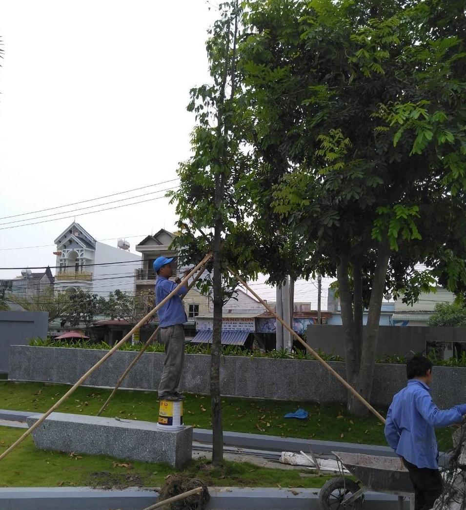 Dịch vụ trồng cỏ trồng cây tại KCN Tân Lập
