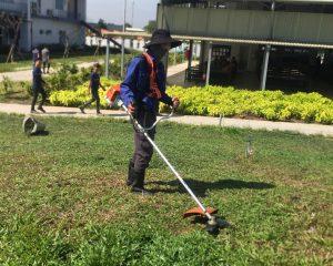 Đơn vị cắt cỏ khu công nghiệp Thới Hòa giá rẻ