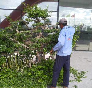 Đơn vị chăm sóc cây xanh KCN Tân Lập chuyên nghiệp