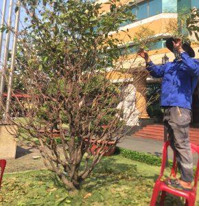 Đơn vị chăm sóc cây xanh KCN Thường Tân chuyên nghiệp