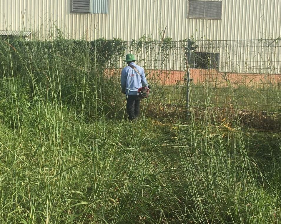 Ngoại thất xanh thực hiện cắt cỏ phát hoang Khu công nghiệp Đất Cuốc