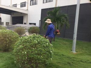 Thuê cắt cỏ tại Khu công nghiệp Bình Đường