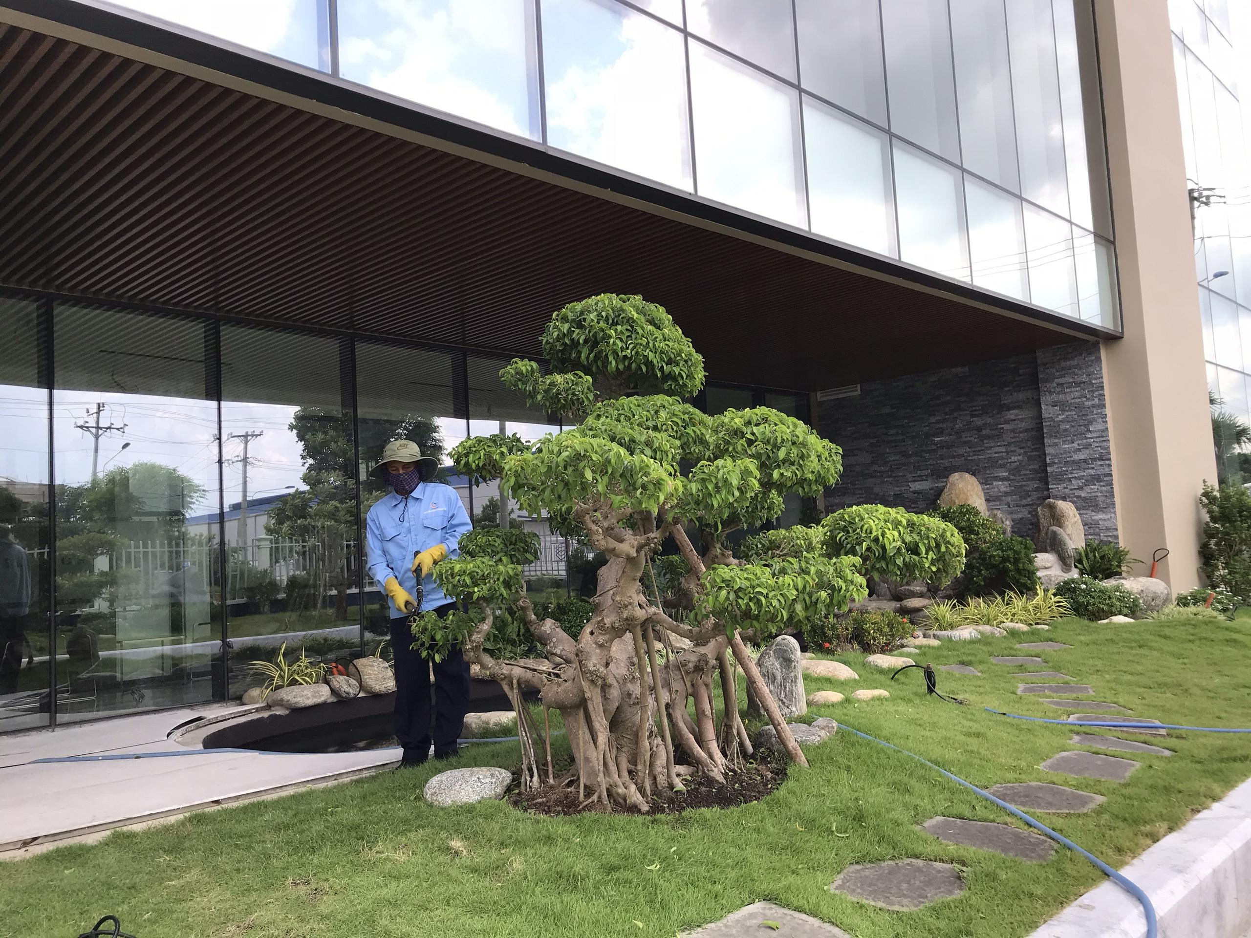 Dịch vụ chăm sóc cây xanh tại Bình Phước từ Ngoại Thất Xanh