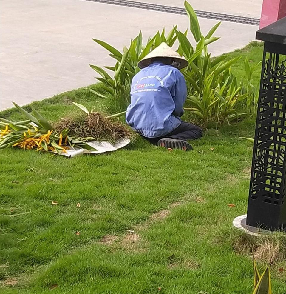Dịch vụ chăm sóc cây xanh tại Long An của Ngoại Thất Xanh
