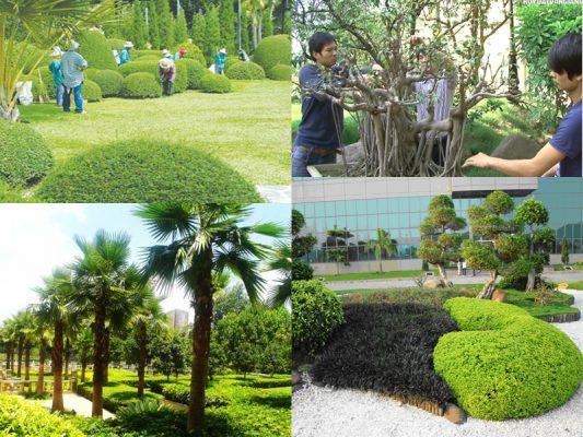 Dịch vụ trồng cây xanh tại Tây Ninh