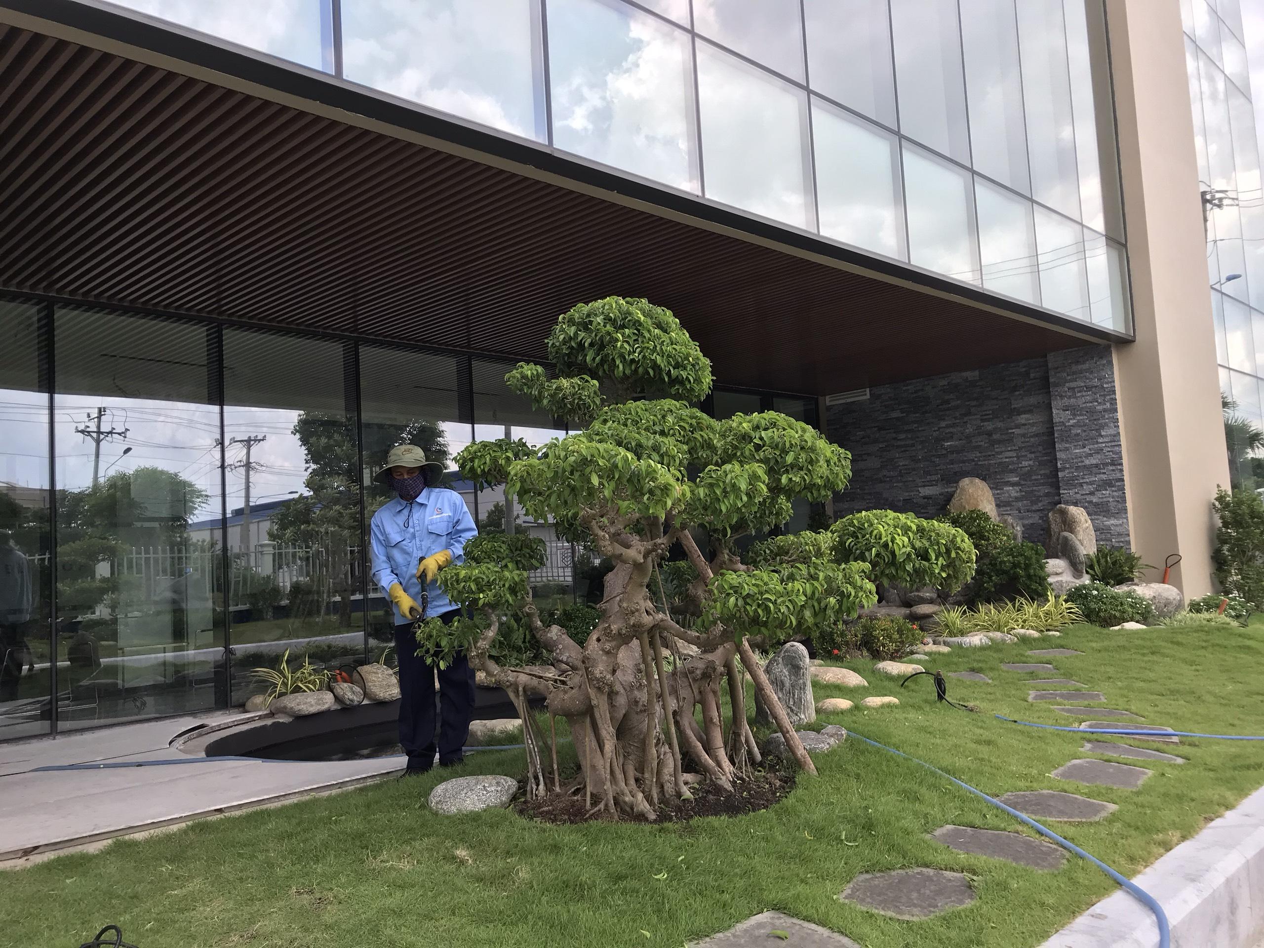 Quy trình chăm sóc cây xanhh tại Long An của Ngoại Thất Xanh