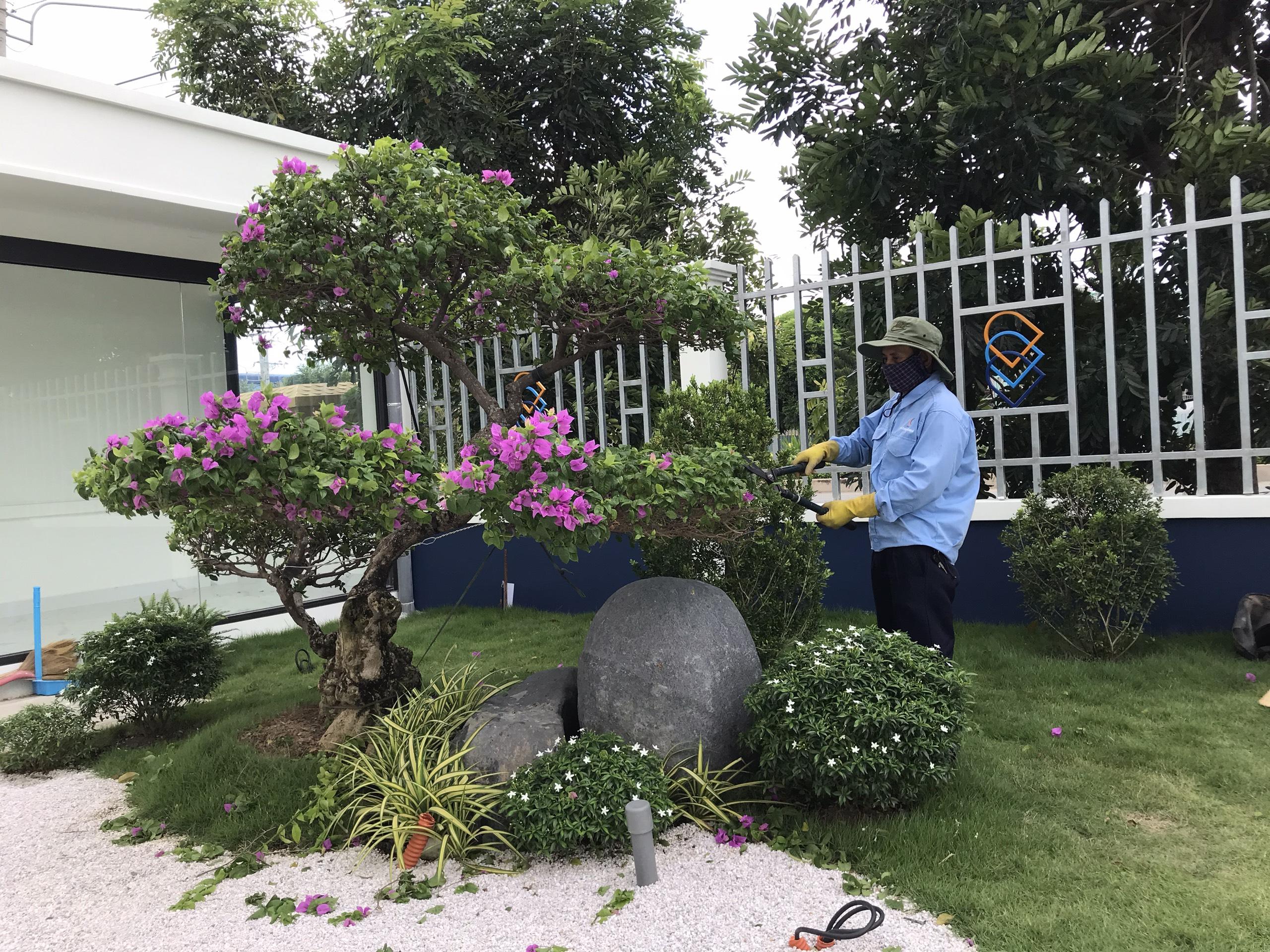 Quy trình chăm sóc cây xanh tại Tây Ninh chuyên nghiệp