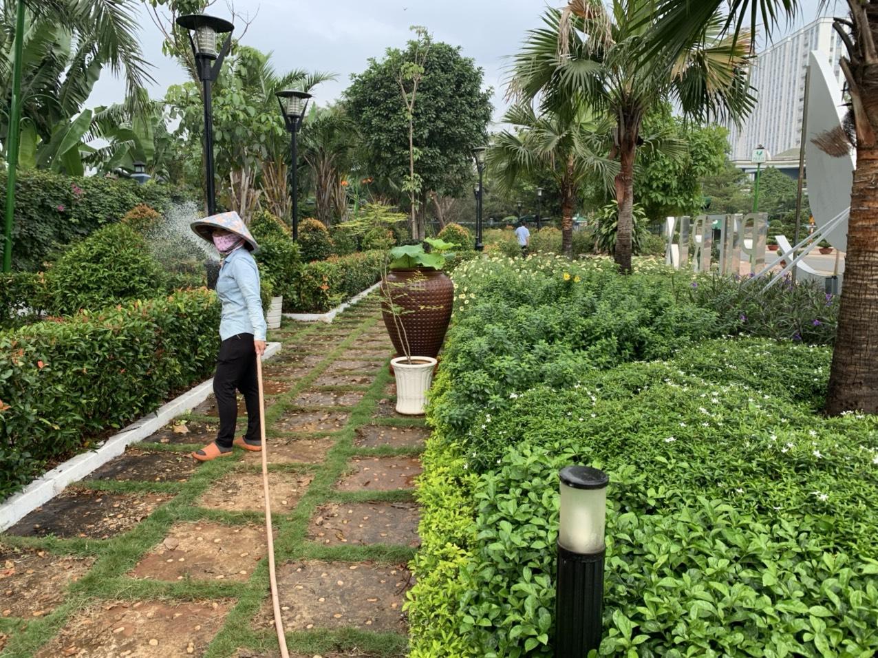 Thực hiện dịch vụ chăm sóc cây xanh tại Long An từ Ngoại Thất Xanh