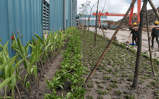Công ty cây xanh tại Đồng Nai