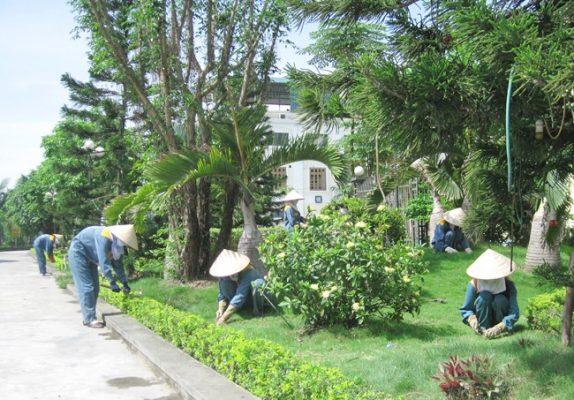 Công ty cây xanh tại TPHCM