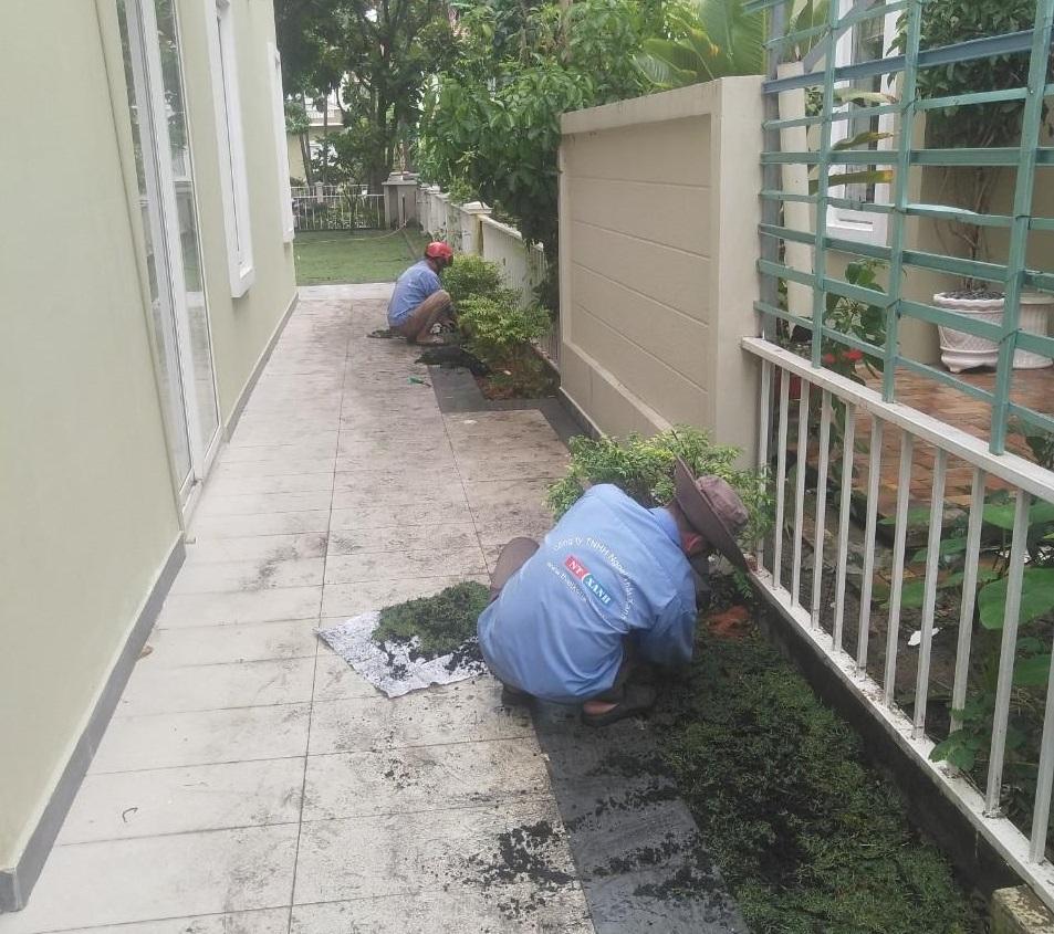 Dịch vụ trồng cây xanh tại Đồng Nai của Ngoại Thất Xanh