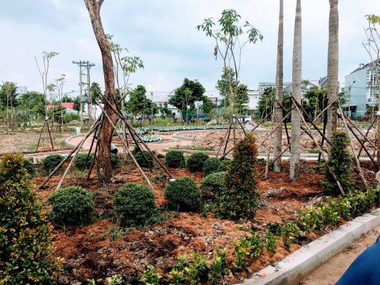 Dịch vụ trồng cây xanh tại Long An