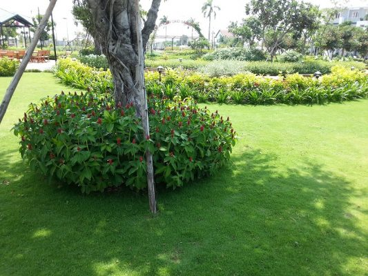 Dịch vụ trồng cỏ, cây xanh tại TPHCM
