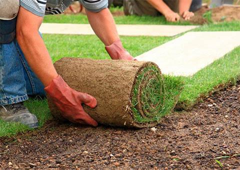 Dịch vụ trồng cỏ tại TPHCM