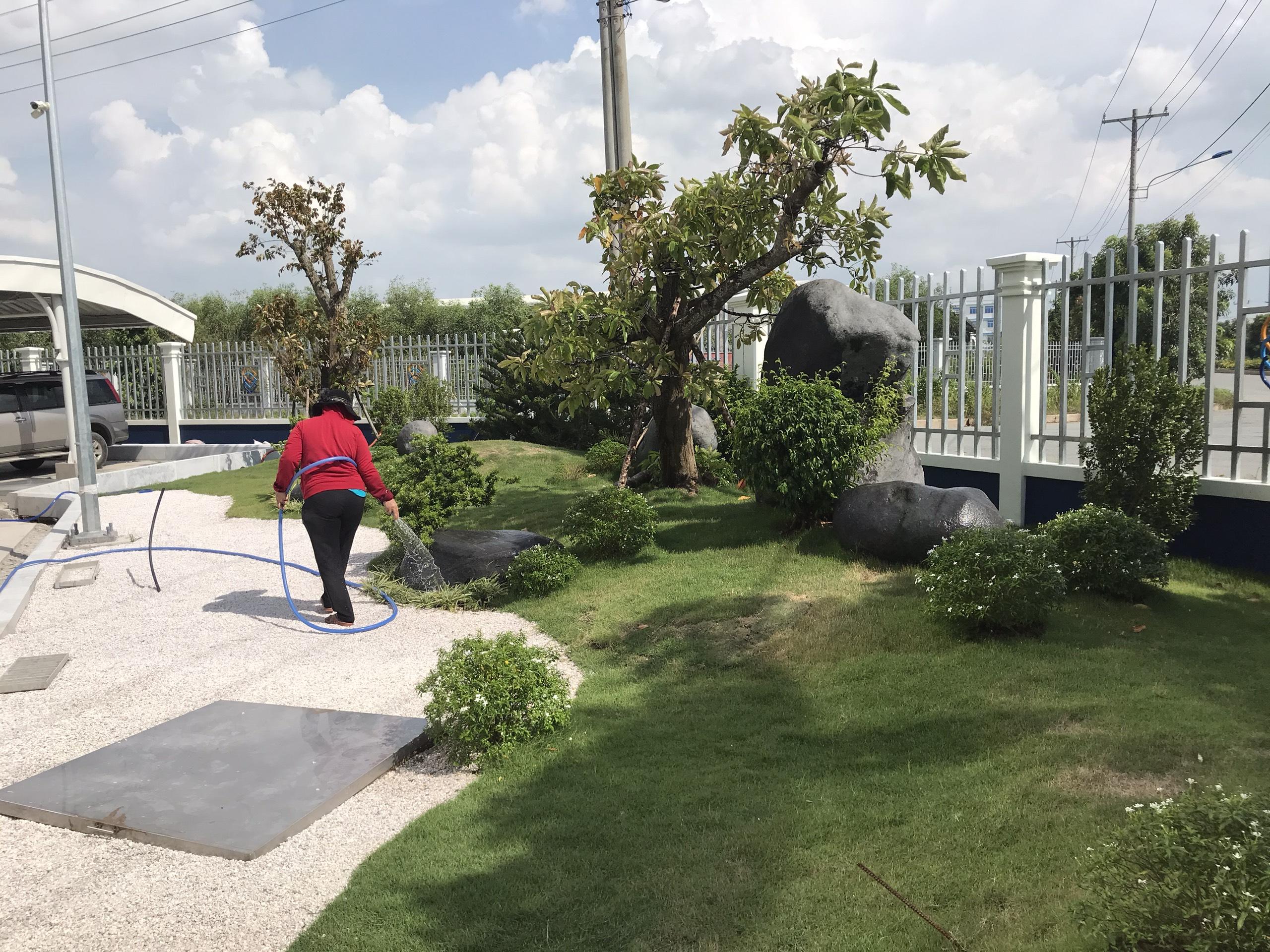 Dịch vụ chăm sóc cây xanh tại khu công nghiệp Long An với Ngoại Thất Xanh