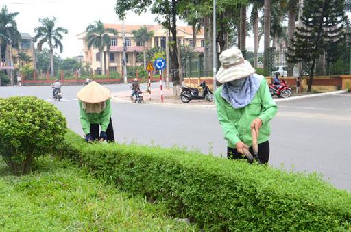 Dịch vụ cắt tỉa cây ở Bình Dương