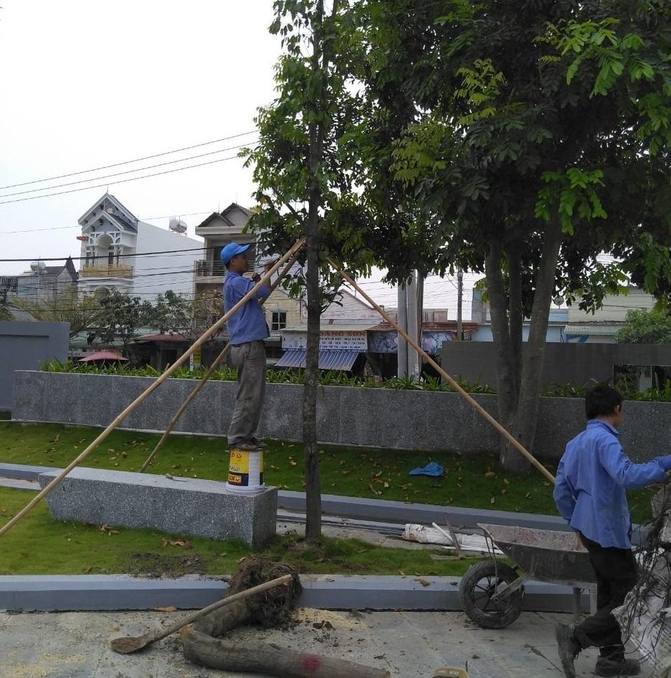 Thi công trồng cây xanh tại khu công nghiệp Bình Dương