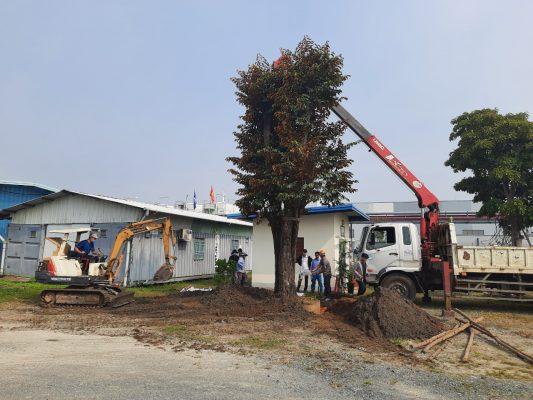 Dịch vụ bứng cây ở Tây Ninh uy tín