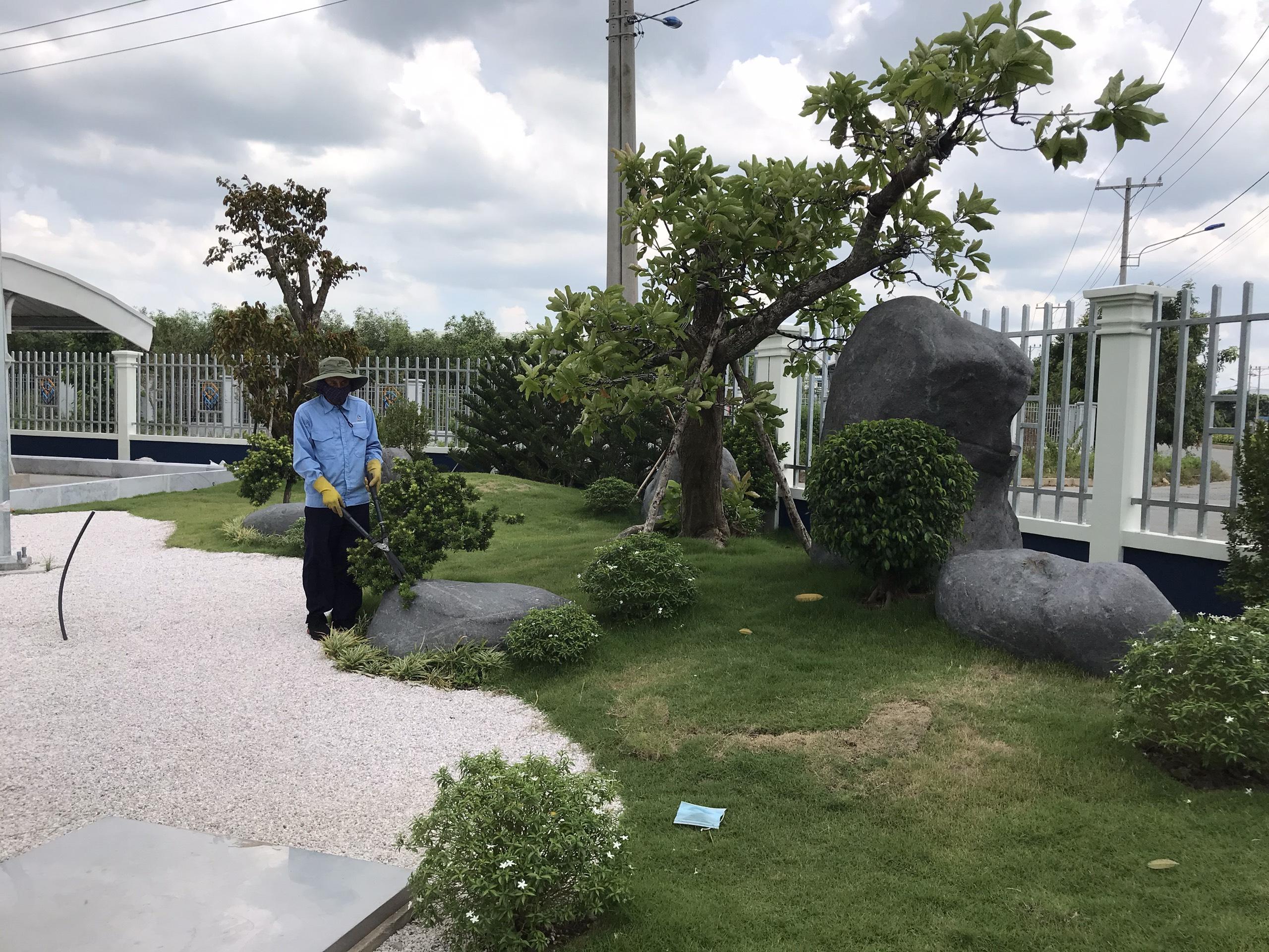 Dịch vụ cắt tỉa cây xanh tại Tây Ninh của Ngoại Thất Xanh