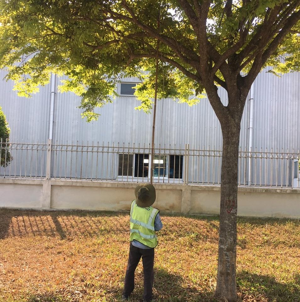 Thực hiện cắt tỉa cây xanh tại Long An từ Ngoại Thất Xanh