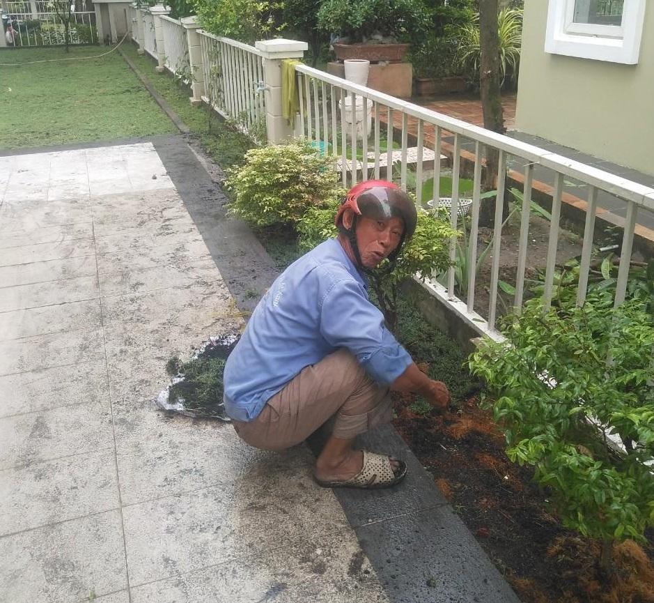 Thực hiện trồng cây xanh tại Long An từ Ngoại Thất Xanh