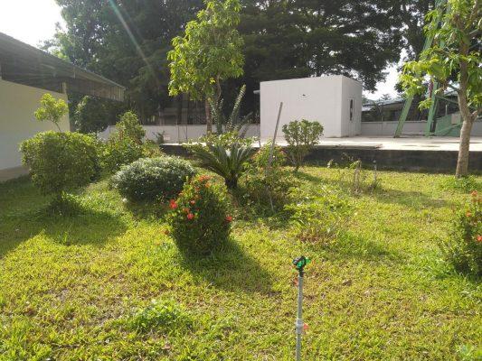 Trồng cỏ, cây xanh giá rẻ tại Tây Ninh