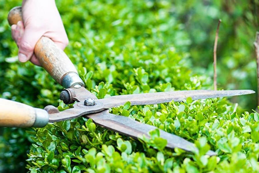 Công ty cắt tỉa cây xanh tại HCM uy tín