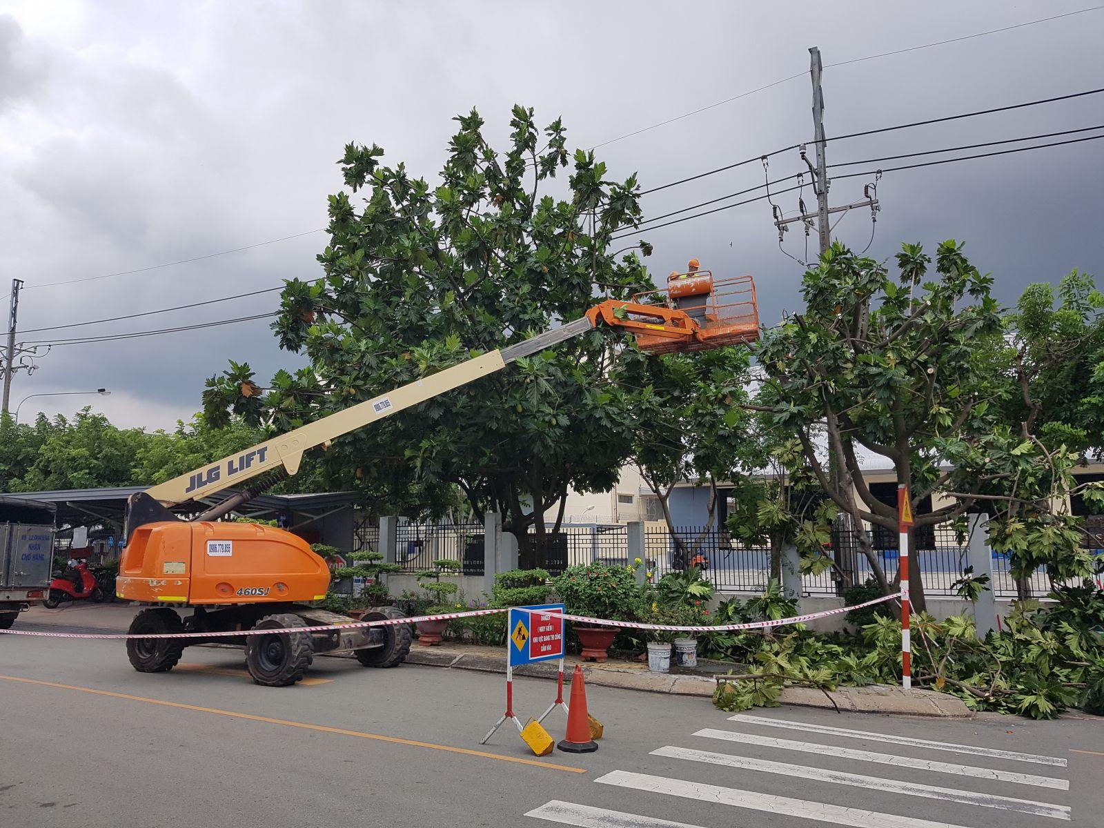 Công ty chặt cây tại Thủ Dầu Một uy tín