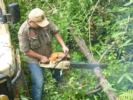 Dịch vụ chặt cây ở Thủ Dầu Một uy tín