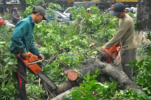 Dịch vụ chặt cây uy tín tại Bình Dương của Ngoại Thất Xanh