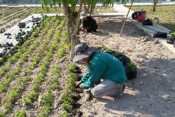 Dịch vụ trồng cỏ, cây xanh KCN Tây Ninh