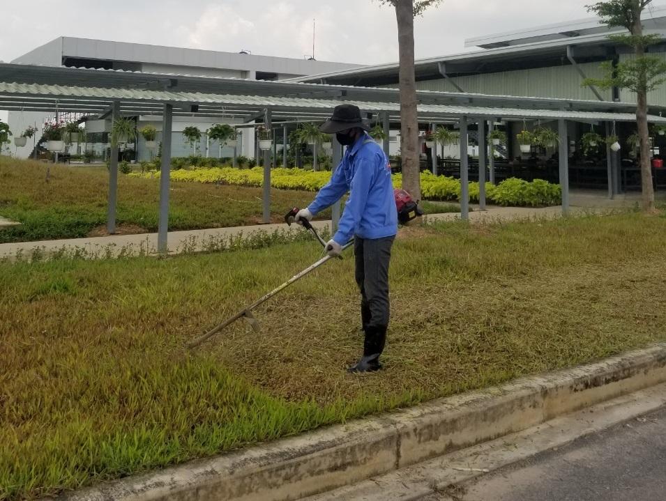 cắt cỏ tại khu công nghiệp Kim Huy