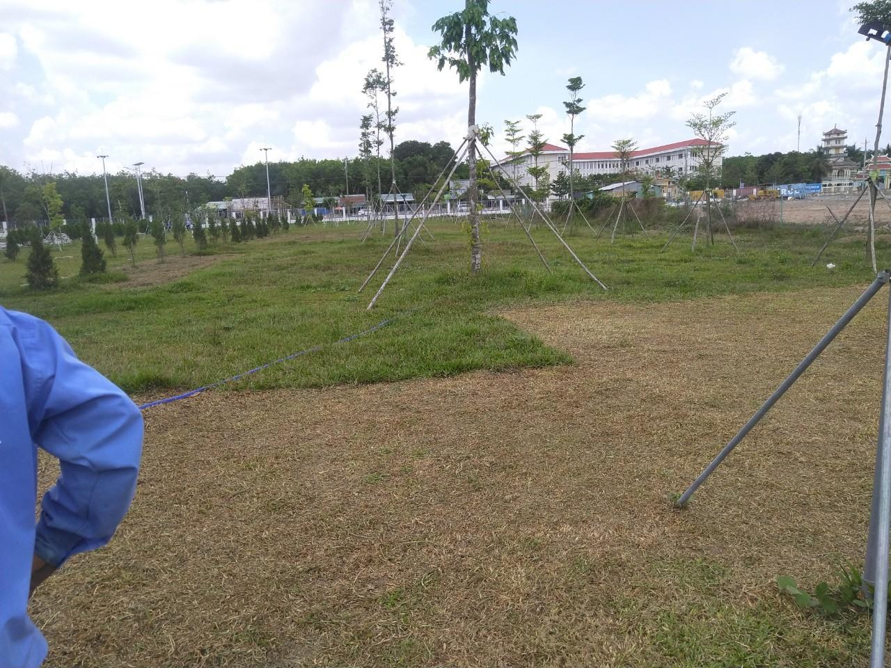 Nhân viên Ngoại Thất Xanh trồng cỏ trồng cây xanh tại khu công nghiệp Bình Lập